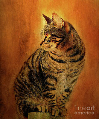 Portraits Of Pets Mixed Media - Portrait Of A Tabby Cat by Kathy Franklin