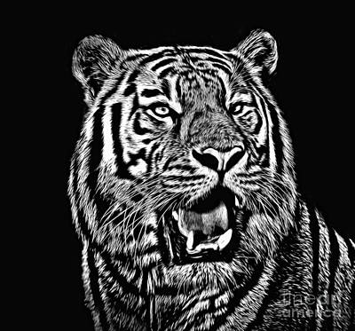 Photograph - Portrait Of A Tiger Black And White by Jim Fitzpatrick