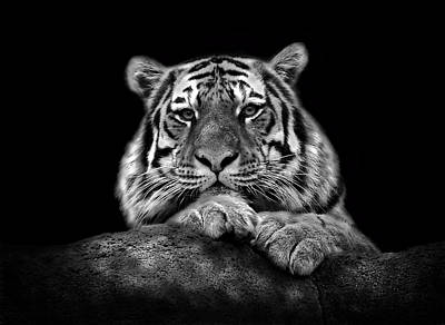 Photograph - Portrait Of A Tiger by Chandler Walker