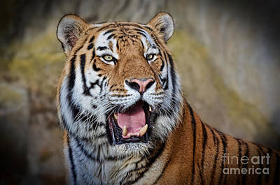 Photograph - Portrait Of A Tiger II by Jim Fitzpatrick