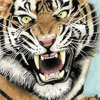 Creativity Drawing - Portrait Of A Tiger by Jack Burdess
