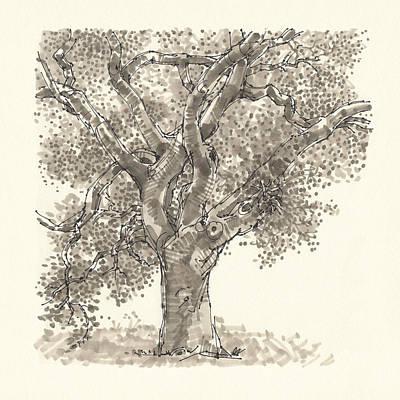Drawing - Oak by Judith Kunzle