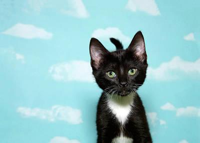 Homeless Pets Photograph - Portrait Of A Tuxedo Kitten by Sheila Fitzgerald
