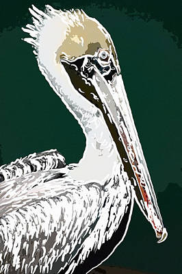 Portrait Of A White Pelican 1 Art Print