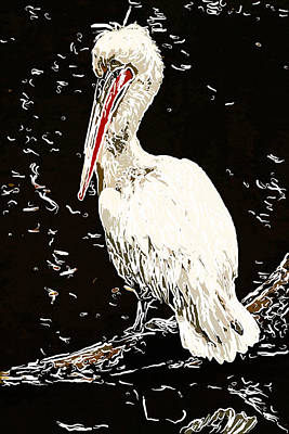 Portrait Of A White Pelican 2 Art Print
