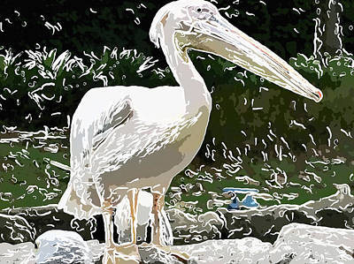 Portrait Of A White Pelican 3 Art Print