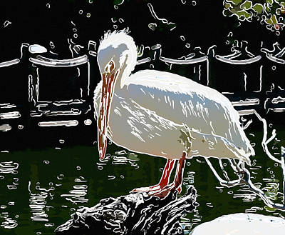 Portrait Of A White Pelican 5 Art Print
