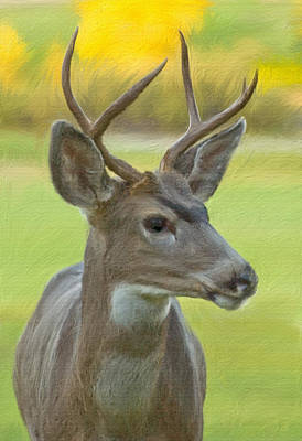 Digital Art - Portrait Of A Young Buck by Mick Burkey