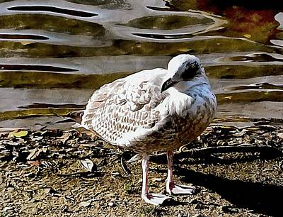 Photograph - Portrait Of A Young Seagull by Dorothy Berry-Lound