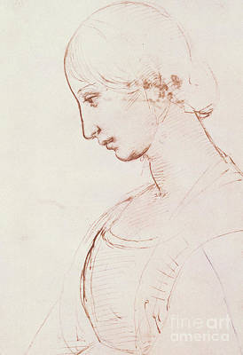 Red Line Drawing - Portrait Of A Young Woman  by Raphael