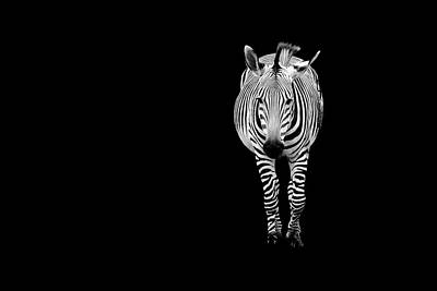 Photograph - Portrait Of A Zebra by Deb Buchanan