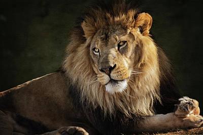 Photograph - Portrait Of An African Lion  by Saija Lehtonen