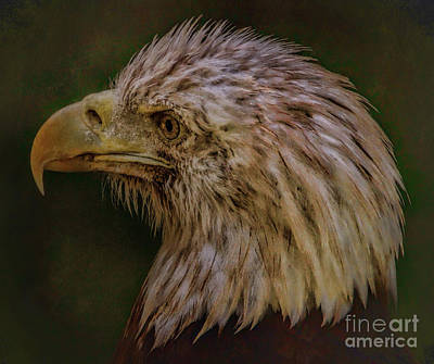 Photograph - Portrait Of An Eagle by Elizabeth Winter