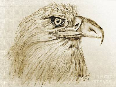 Drawing - Portrait Of An Eagle by Maria Urso