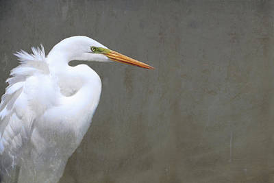 Portrait Of An Egret Rectangle Art Print