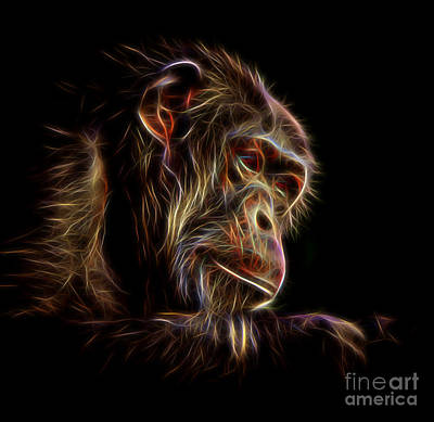 Drawing - Portrait Of An Elderly Chimp II Altered Version by Jim Fitzpatrick