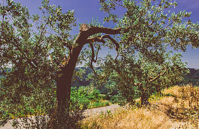 Photograph - Portrait Of An Olive Tree by Cesare Bargiggia