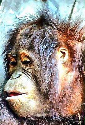 Photograph - Portrait Of An Orangutan by Dorothy Berry-Lound