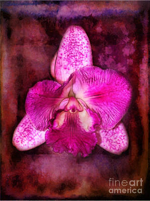 Photograph - Portrait Of An Orchid by Judi Bagwell