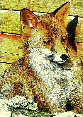 Portrait Of An Urban Fox Art Print