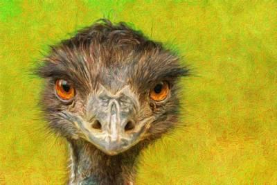 Emu Digital Art - Portrait Of Australian Emu by Miroslav Liska