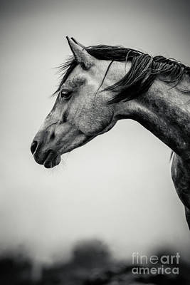 Photograph - Portrait Of Beautiful Horse In Black And White by Dimitar Hristov