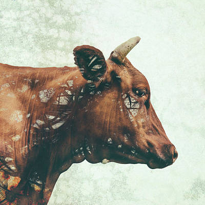 Cow Digital Art - Portrait Of Bess by Katherine Smit