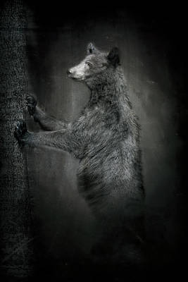 Photograph - Portrait Of Black Bear Resting Against Tree by Dan Friend