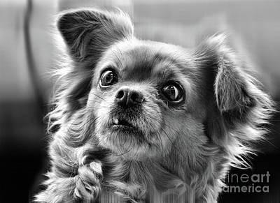 Photograph - Portrait Of Dog  by Daliana Pacuraru