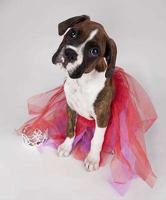 Portrait Of Dog Wearing Tutu Art Print by Leah Hammond