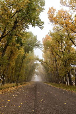 Photograph - Portrait Of Fall Foliage And A Foggy Road by Tony Hake