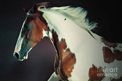 Photograph - Portrait Of Galloping Paint Horse by Dimitar Hristov