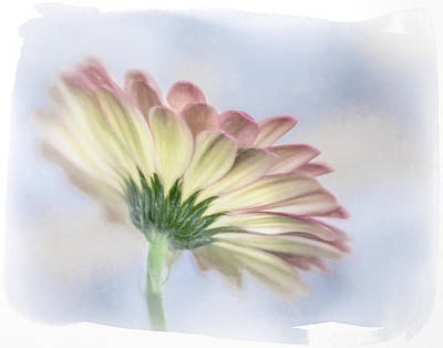 Photograph - Portrait Of Gerbera Daisy 2 by David and Carol Kelly