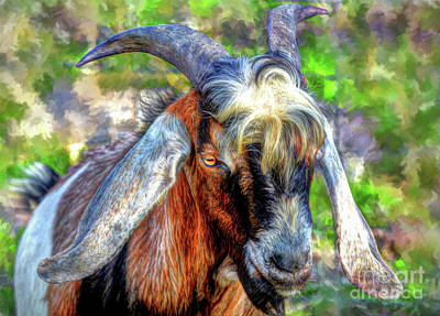 Photograph - Portrait Of Goat by Savannah Gibbs