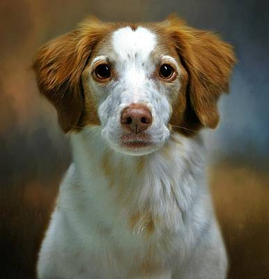 Photograph - Portrait Of Gracie by Stephanie Calhoun