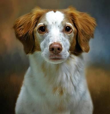 Photograph - Portrait Of Gracie by Stephanie Calhoun