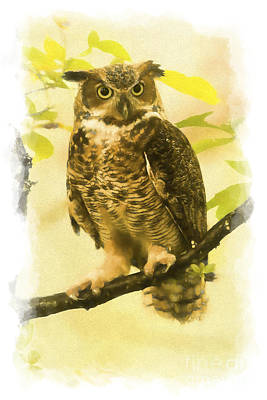 Photograph - Portrait Of Great Horned Owl    Paintography by Dan Friend