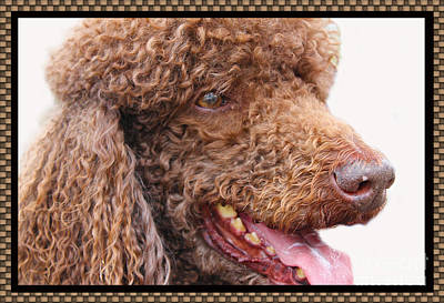 Photograph - Portrait Of Guinness by Nina Silver