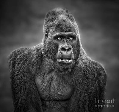 Photograph - Portrait Of King Kongs Cousin IIi by Jim Fitzpatrick