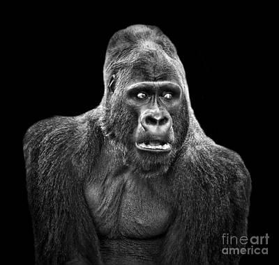 Digital Art - Portrait Of King Kongs Cousin Iv by Jim Fitzpatrick