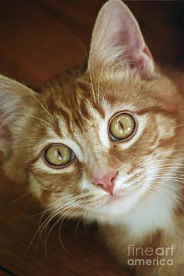 Photograph - Portrait Of Kitten Erril Owl Eyes by Rose De Dan