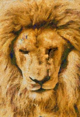 Photograph - Portrait Of Lion by Scott Carruthers
