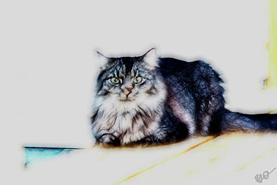 Portrait Of Maine Coon, Mattie Art Print