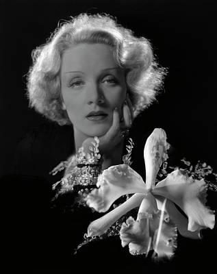 Portrait Of Marlene Dietrich Art Print