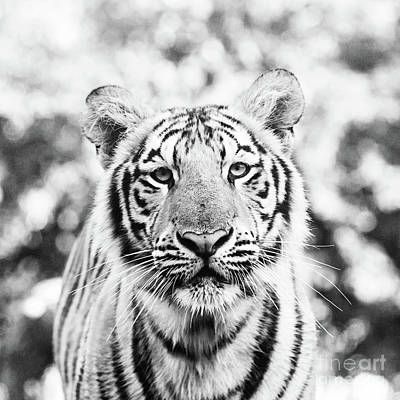 Portrait Of Mike Vii - Square Bw Art Print