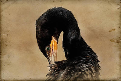 Photograph - Portrait Of Neotropic Cormorant Preening - Textured Background by Debra Martz