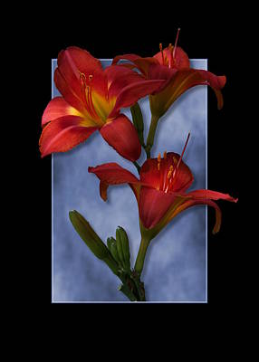 Digital Art - Portrait Of Red Lily Flowers by Debi Dalio