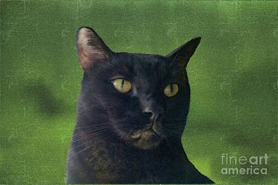Photograph - Portrait Of Salem The Cat by Janette Boyd