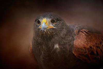 Harris Hawk Photograph - Portrait Of The Harris Hawk by Jai Johnson