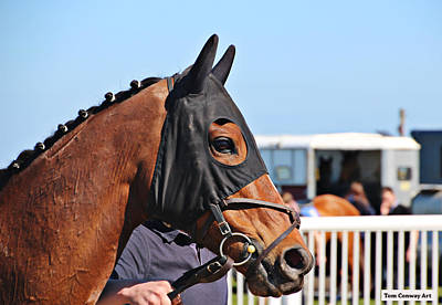 Photograph - Portrait Of The Horse In The Hood by Tom Conway